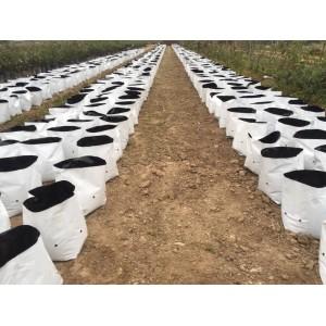 Túi  bầu 18 x 36  trong nông nghiệp