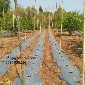 Màng phủ luống nông nghiệp